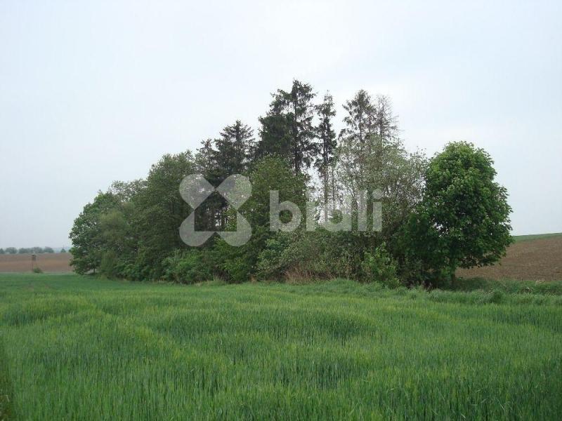 Prodej,pozemky orná půda,42.798m2 a lesík 1487m2,